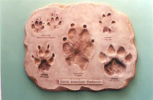 FOOTPRINT ASSORTMENT