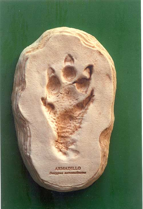 Armadillo footprint